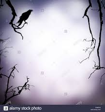 halloween black and white background halloween background with raven silhouette and free space for text