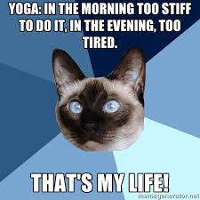 Too Tired Meme - saturday 10 january 2015 meme images chronic illness cat