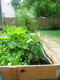 a true garden salad 10 tips for growing your own vegetables the