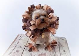 Halloween Costumes Dogs Dog Costume Dog Halloween Costume Lion Dog Costume Pet
