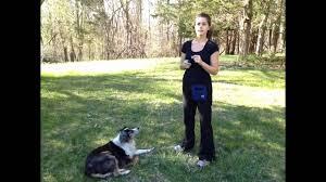 australian shepherd training tips clicker train your australian shepherd a quick intro u0026 the name