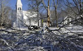 cape trees feel brunt of blizzard news capecodtimes com
