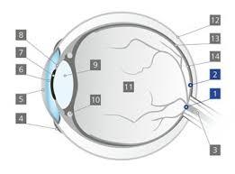 What Is The Blind Spot 100 What Is The Blind Spot Of The Retina Visual Field