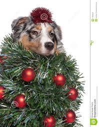 puppies and christmas trees christmas lights decoration