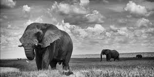 Black And White Photography Nature Photography In Black And White Africa Geographic