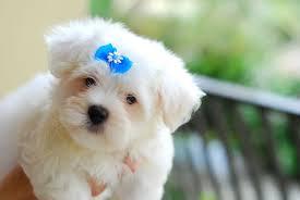 50 cute dogs wallpapers dog puppy desktop wallpapers u2013 hd