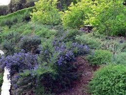 62 best native plants images on pinterest native gardens