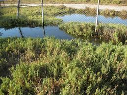 san diego native plants california native plants at gum grove park u0026 heron pointe
