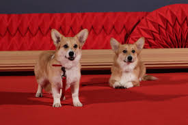 video prince harry says queen u0027s corgis have warmed more to meghan