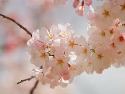 Cute Flower Wallpapers - pressed flower delights flower wallpapers
