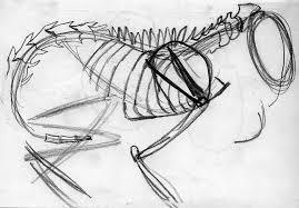 cat skeleton sketch the ebestiary