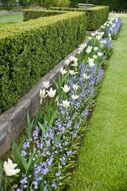 best 10 hedges ideas on pinterest hedge fence ideas hedges