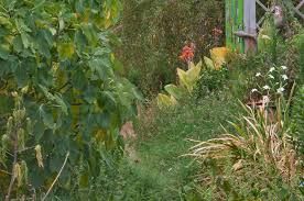photo 1067 11 overgrown path in tamu holistic garden in texas a u0026m
