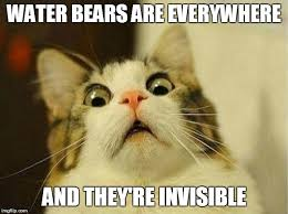 Invisible Cat Memes - scared cat meme imgflip