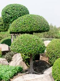 topiary trees 53 stunning topiary trees gardens plants and other shapes