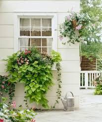 Window Boxes Planters top 25 best window box planter ideas on pinterest outdoor
