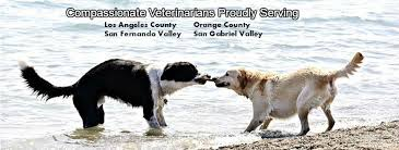 pet euthanasia choice veterinary care in home pet euthanasia home