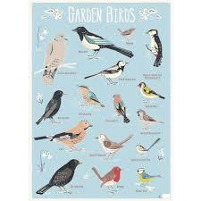 bird wrapping paper garden birds wrapping paper 5 sheets rex london dotcomgiftshop