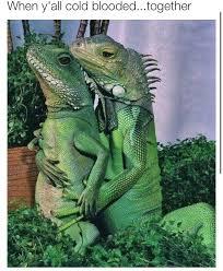 Lizard Meme - memebase lizards all your memes in our base funny memes