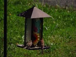 georgia back yard bird watching