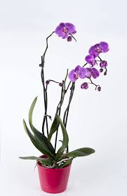 orchids care marina times orchids care and feeding