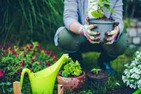 gardening to do list august in the garden