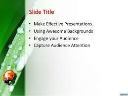 3016 ladybug powerpoint template