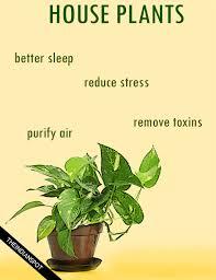 benefits of houseplants amazing health benefits of house plants theindianspot