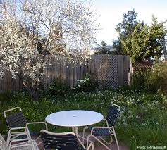 Backyard Guest Cottage by Sunny Furnished Guest Cottage In Berkeley California Backyard