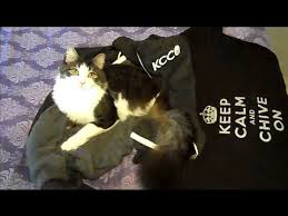 two legged cat anakin knows how to kcco chive on anakin loved my