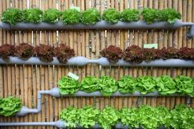 Urban Gardening Ideas - grow up how to design vertical gardens for tiny spaces