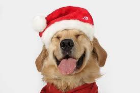 dog christmas dog christmas cutest paw