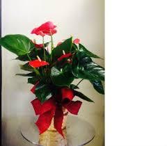 flower delivery wichita ks sympathy funeral flowers delivery wichita ks lilie s flower shop