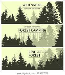 fir trees silhouette banners pine vector photo bigstock