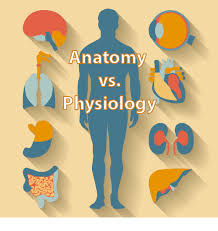 Study Guide Anatomy And Physiology 1 Difference Between Anatomy And Physiology Educator Com