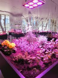 Grow Room Lights Solar Grow Room U2013 New York Art Tours