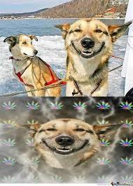 High Dog Meme - th id oip ydvb1vqdnz56yw4k8cdiswhaks