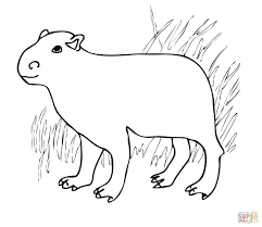 capybara south america coloring free printable