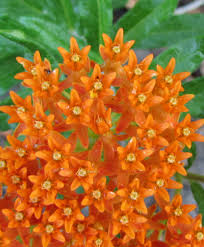 florida native plants for sale sandra gail lambert my biannual rant about native plants just