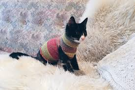 sweaters for cats diy sock sweater for your cat the kitten