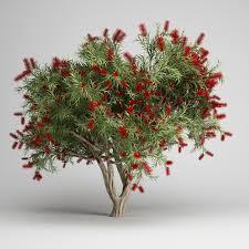 bottlebrush tree cgaxis 3d models store