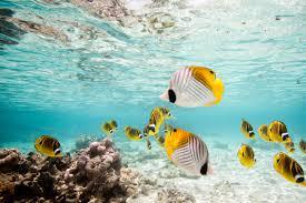 image result for rarotonga cook islands coral reef rarotonga is