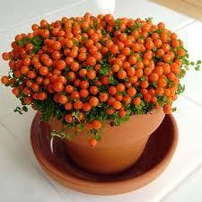 Plants To Grow Indoors Annuals U0026 Bulbs Growing Indoor Plants