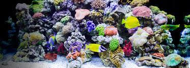fish tank something fishy aquarium supplies substrates base rock
