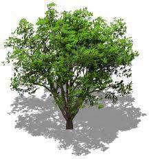 animated isometric tree bleed s opengameart org