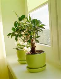 good inside plants removing leaves from indoor plants