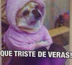 Memes De Chihuahua - perro chihuahua meme s mega memeces imagenes chistes y memes