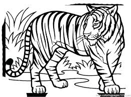 coloring page tigers tiger coloring pages tiger new coloring page tiger coloring pages
