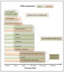 soils free full text molecular and microscopic insights into