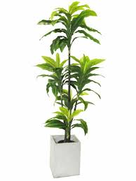 image information indoor house plants png plants top view png